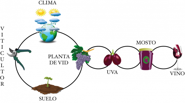 Ecosistemadelaplantadevid